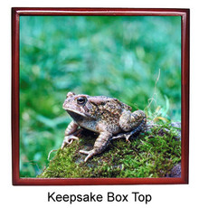 Toad Keepsake Box