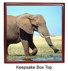Elephant Keepsake Box