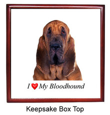 Bloodhound Keepsake Box
