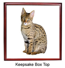 Savannah Keepsake Box