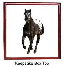 Appaloosa Keepsake Box
