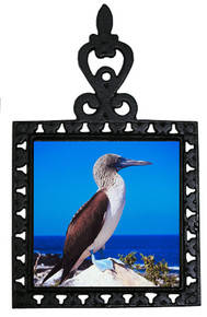 Blue Footed Booby Iron Trivet