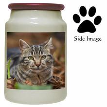 Tabby Cat Canister Jar