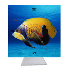 Blue Girdled Angelfish Desk Clock