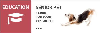 Senior Pet Seminar