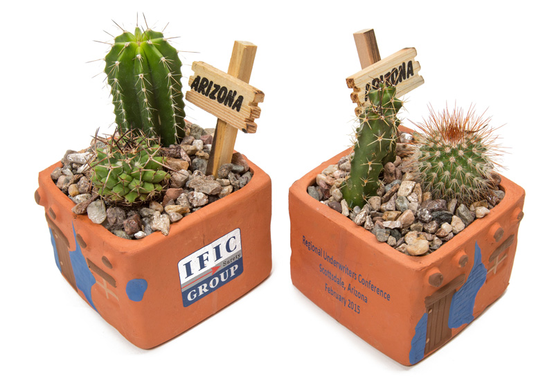 custom live cactus promotional gifts