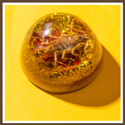 Scorpion Dome Paper Weight, AZ Medium