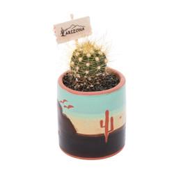 Mini Mini Cactus