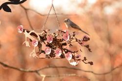 Cherry Blossom Bird Feeder