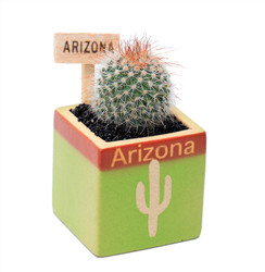 Arizona Cactus Square