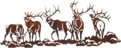 Boy's Night Out (Elk)