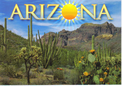 Arizona Sunshine Postcard - Pack of 100