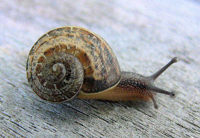 snail700.jpg