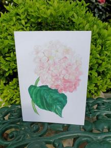 Hydrangea Card by Sarah Cameron - Blank Inside  - Choice of Pack Sizes