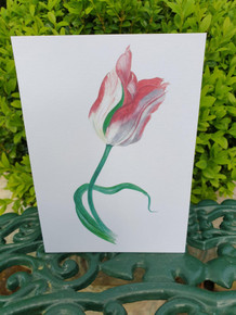 Tulip Card by Sarah Cameron - Blank Inside - Choice of Pack Sizes
