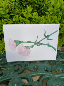 Carnation Card by Sarah Cameron - Blank Inside -  Choice of Pack Sizes