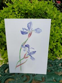 Iris Card by Sarah Cameron - Blank Inside For Any Occasion - 1 Card