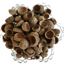 Dried Acorn Caps - Decorative - Pot Pourri - 200g Bag - Natural