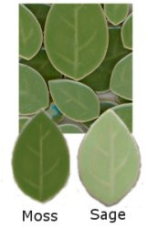 01- Green Leaf Tile