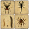 Botanical Bugs Coaster Set. Hand Made Marble Giftware by Studio Vertu.