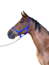 Canterbury Solid Brass Web Headstall