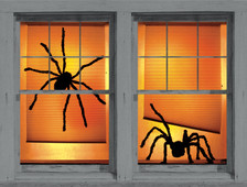Shadys spider posters shown in two windows