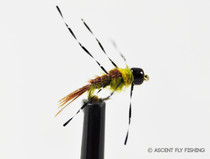 Anato Mayfly Nymph