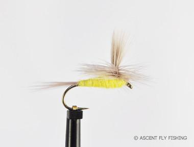 Parachute Sulphur