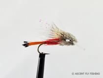 Red Turk's Tarantula