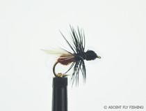 Black & Rust Flying Ant