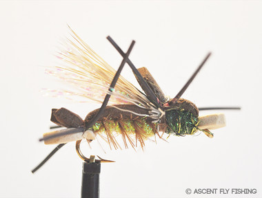 Amy's Ant - Green & Tan