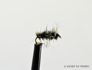 Griffith's Gnat