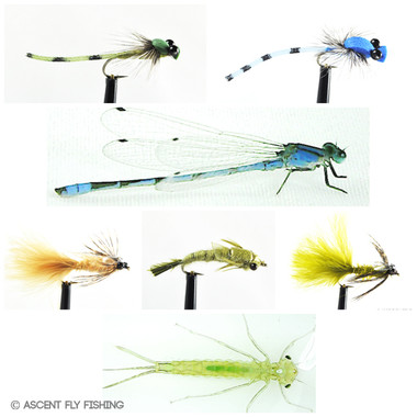 Damselfly Selection