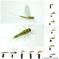 Blue Winged Olive Mayfly Selection