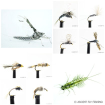 Callibaetis Mayfly Selection