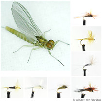 Go-To Dry Mayfly Selection