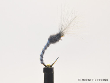 Grey Quill Midge Emerger