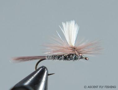 Parachute Blue Dun