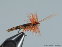 Tent Wing Caddis
