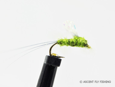 Olive Sparkle Wing RSII