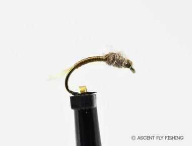 Chocolate Loopwing WD-40
