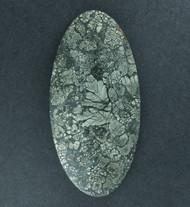 Gorgeous! Malibu Plume Marcasite Agate Cabochon  #17826
