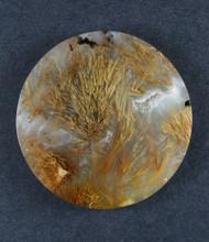 Gorgeous Designer Cabochon of Nipomo Sagenite Agate  #17966
