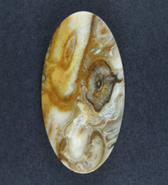Gorgeous Yellow Petrified Palm Wood Designer Cabochon  #18057