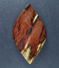 Unusual Tuscarora Petrified Wood Designer Cabochon  #18147