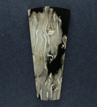 Gorgeous Texas Petrified Palm Wood Designer Cabochon #18292