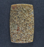 Multi-colored Gem Dinosaur Bone  Cabochon-   #18339