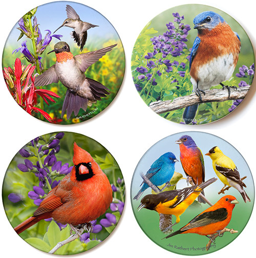 Bird Coasters Variety Pack   Sandstone Coasters   Jim Rathert Photography   4 pack