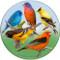 Colorful Migrant Birds Sandstone Ceramic Coaster   Front View