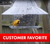 Rare Yellow Cardinal feeding at a Sky Cafe Bird Feeder